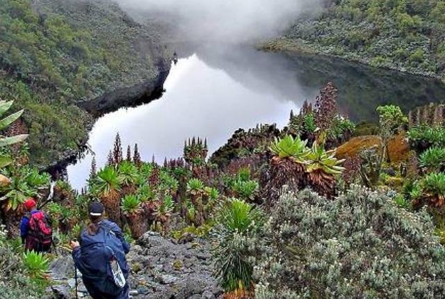 Parc national des montagnes Rwenzori