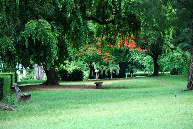 Visite du magnifique jardin botanique de la Dominique