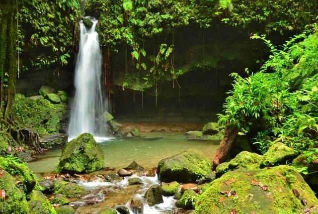 Explorez le parc national Lush Morne Trois Pitons