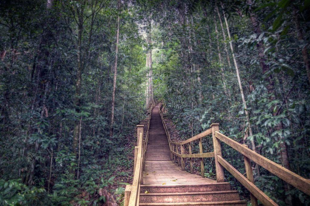 Parc national Ulu Temburong