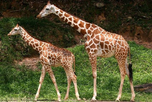 Regardez les animaux dans le zoo de Dublin